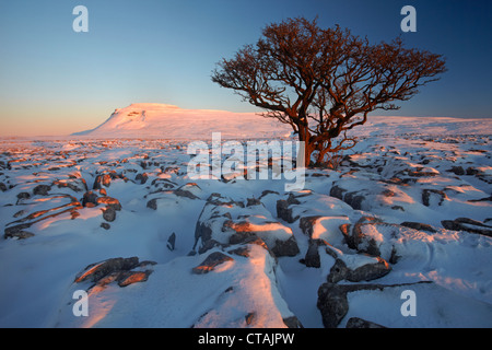 Ingleborough, seen from White Scars limestone pavement at sunset - Stock Photo
