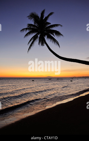 Crooked palm tree at beach sunset, South China Sea, Mui Ne, Binh Thuan, Vietnam - Stock Photo