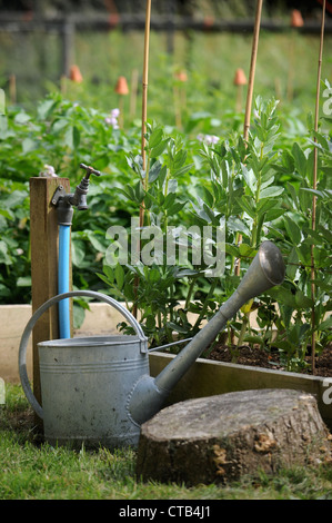 A watering can and garden tap alongside raised vegetable beds UK - Stock Photo
