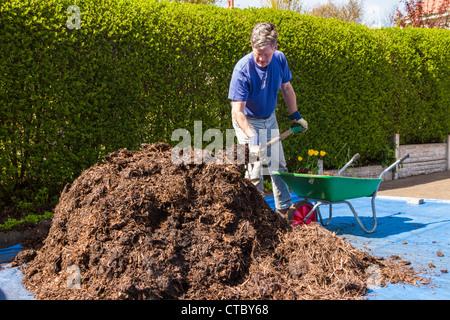 Man shovelling manure into wheelbarrow - Stock Photo