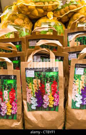 Gladioli bulbs for sale at flower market - Stock Photo