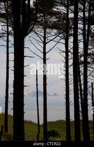 The edge of the forest of Corsican pine trees with Snowdonia in the background Newborough Forest Anglesey North - Stock Photo