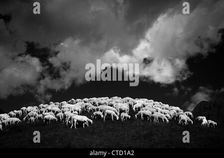 Flock of sheep on hillside - Stock Photo