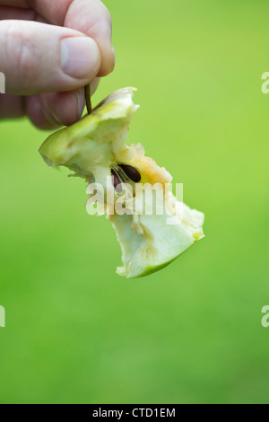 Hand holding an Apple core - Stock Photo