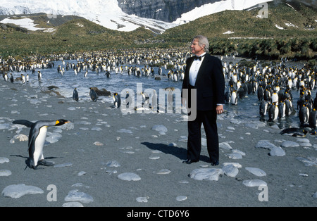 A visitor to Antarctica dresses appropriately in a tuxedo to mimic the King Penguins at Gold Harbor on South Georgia - Stock Photo