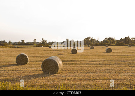 Round hay bales on the field - Stock Photo