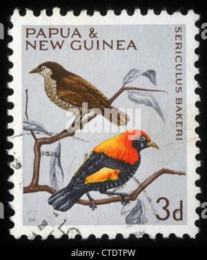 PAPUA NEW GUINEA - CIRCA 1991: A stamp printed in Papua New Guinea shows a bird, sericulus bakeri, circa 1991 - Stock Photo