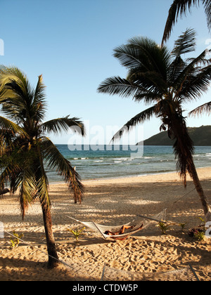 Waya Lailai Island, Fiji; palm trees with woman in hammock - Stock Photo
