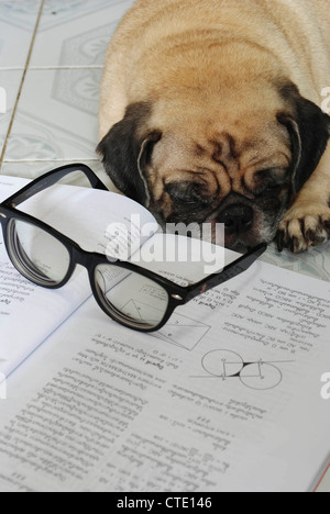 Dog Fell Asleep while doing her homework - Stock Photo