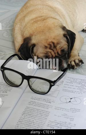 aqa as english literature coursework deadline