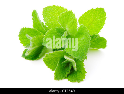 Mint, isolated on white background - Stock Photo