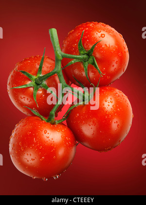 Fresh juicy appetizing tomatoes on the wine sprayed with water. Cluster tomatoes. - Stock Photo