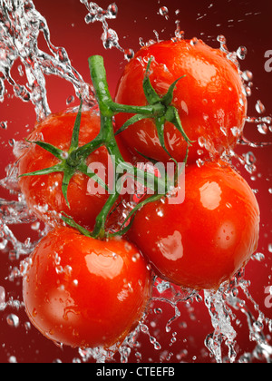 Fresh juicy cluster tomatoes, tomatoes on the vine in a big splash of water - Stock Photo
