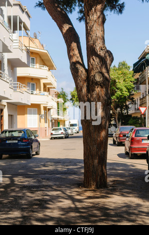 Tree growing in the middle of a Spanish road - Stock Photo