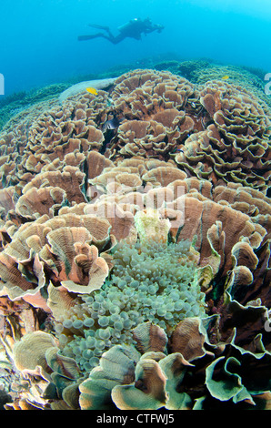 Coral reef scene, Komodo national park, Indonesia - Stock Photo