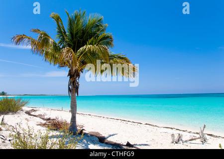 Palm Tree, Sirena Beach, Cayo Largo del Sur, Cuba - Stock Photo