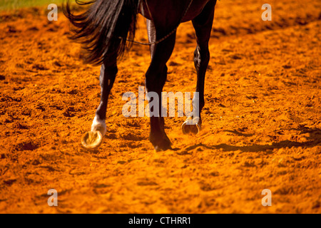 A close up image of the hooves of a racehorse in the red sand on the training course - Stock Photo