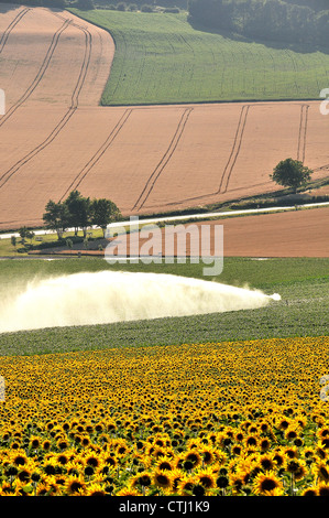 Field of wheat limagne auvergne france europe stock - Central jardin saint bonnet pres riom ...