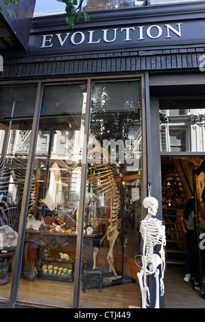 The Evolution Store in Spring Street Soho sells Skulls, Skeletons , New York, USA, - Stock Photo