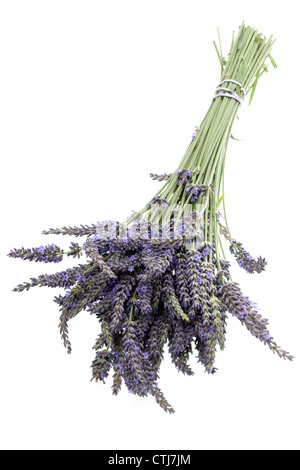 Bunch of lavender flowers and stems - Stock Photo