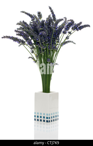 Bunch of lavender flowers and stems in a small white vase - Stock Photo