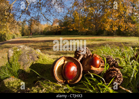 Fallen Pine Cones And Nuts On The Ground In Autumn; Scottish Borders, Scotland - Stock Photo