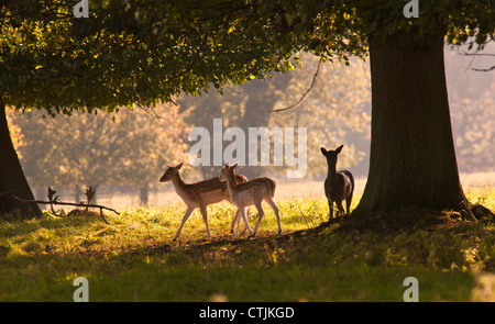 Deer Standing Under A Tree; North Yorkshire, England - Stock Photo