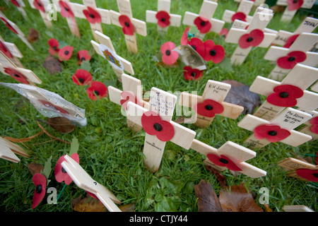 wooden poppy crosses with old photographs in annual Field of Remembrance for casualties of war on armistice day - Stock Photo