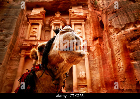Close up of a camel's head in front of the treasury in the Petra canyon - Stock Photo