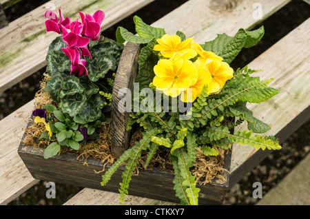 Basket of primrose and cyclamen flowers on a wooden bench - Stock Photo