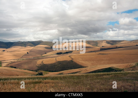 The rolling hills and harvested wheatfields of the Ruens, near Caledon, Western Cape, South Africa.