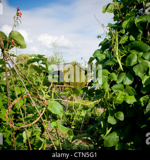 Shed on an allotment site - Stock Photo