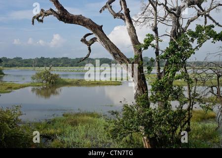 Reservoir and vegetation of Yala National Park, Sri Lanka - Stock Photo