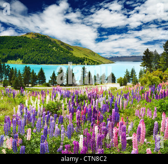 Landscape with lake and flowers, New Zealand - Stock Photo