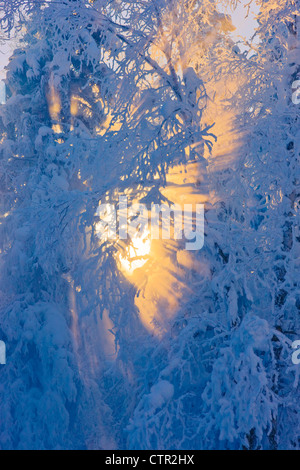Sun filtering through fog in hoarfrost covered forest Russian Jack Springs Park Anchorage Southcentral Alaska Digitally - Stock Photo