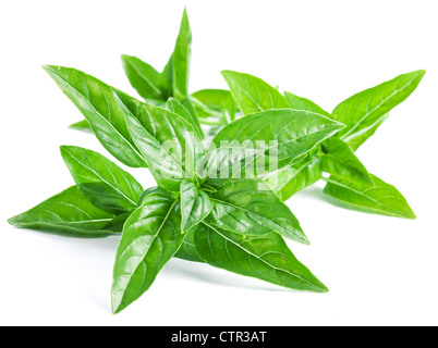 Leaves of basil on a white background - Stock Photo