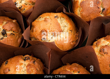Currant bun cup cakes - Stock Photo