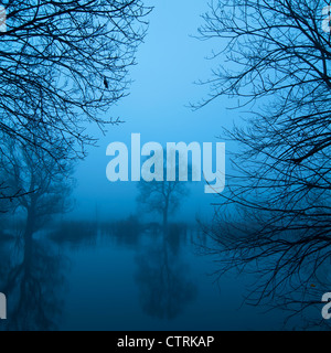 Tree by a lake in the morning mist - Stock Photo