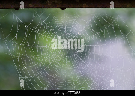 Dew drops on a spider's web in the early morning mist. - Stock Photo