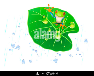 Isolated frog on the lotus leaf in the rain. - Stock Photo