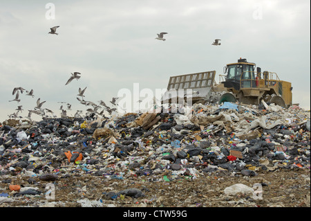 Gulls scavenging at Pitsea landfill site in Essex. August 2011. - Stock Photo