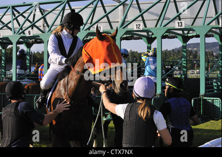 Forcing the horse and rider into the stalls at start of race - Stock Photo
