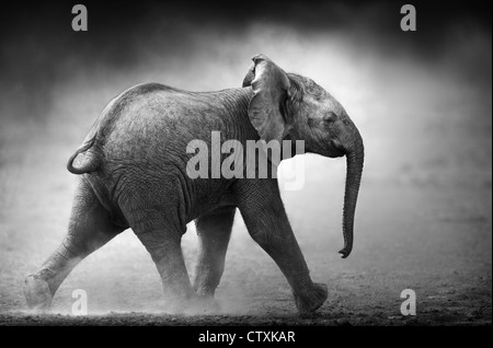 Baby Elephant running in dust (Artistic processing) Etosha National Park - Namibia - Stock Photo