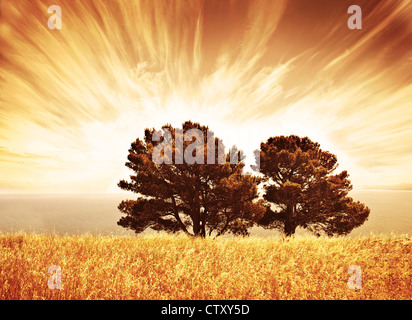 Lonely old trees, grunge autumn background, warm orange sunlight, big dry oak tree on wheat field over sunset, South - Stock Photo