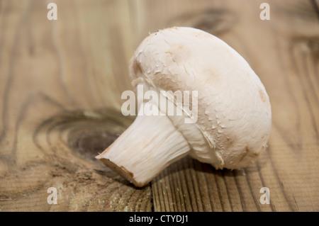 One single Mushroom on wooden backround - Stock Photo