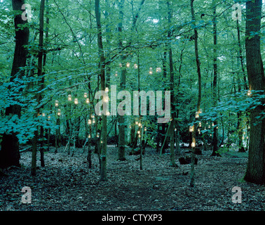 Lanterns hanging from trees in forest - Stock Photo