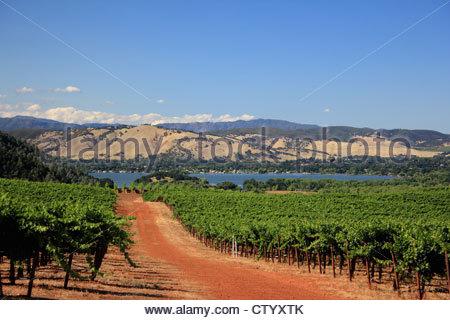 Dirt road in rural vineyard - Stock Photo