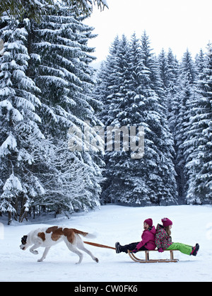 Dog pulling children on sled in snow - Stock Photo