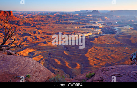 rugged desert terrain in afternoon light cliffs and mesas  in background.  Dead tree and rocks in foreground elevated - Stock Photo