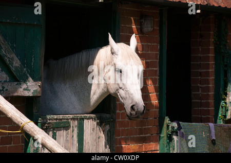 Horse Looking out of Stable at a Farm in Hampshire England UK - Stock Photo